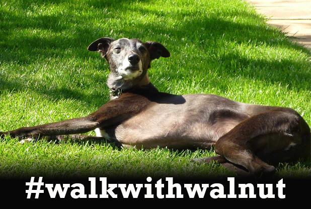 WalkwithWalnut