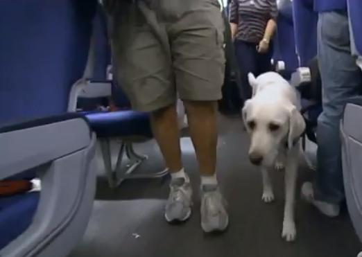 Animales De Apoyo Emocional Perros Que Sí Pueden Volar Junto A Sus