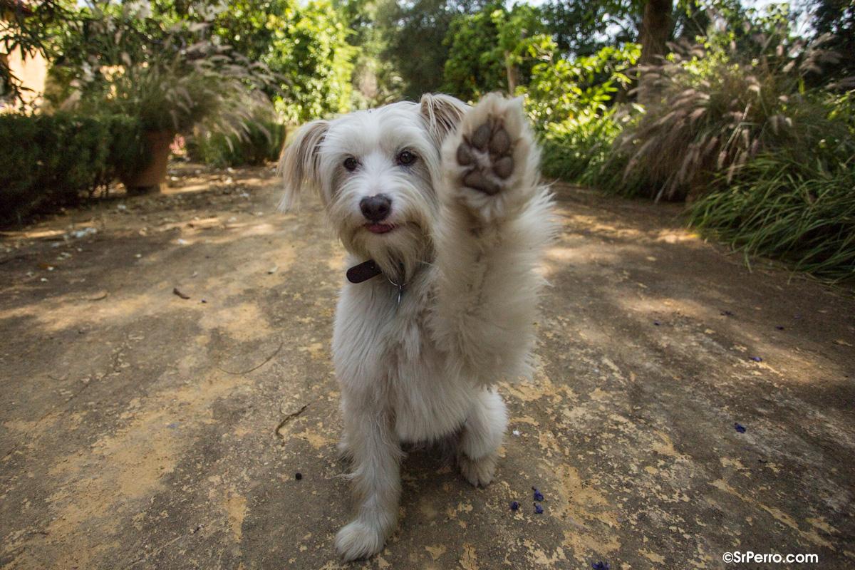 """Un estudio analiza y """"traduce"""" los gestos más comunes de los perros al comunicarse con nosotros"""