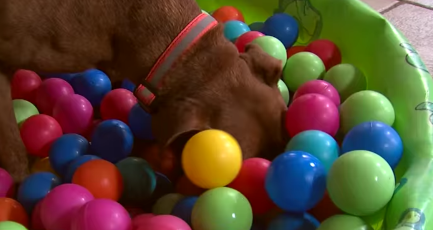 juegos de perros juegos de perros