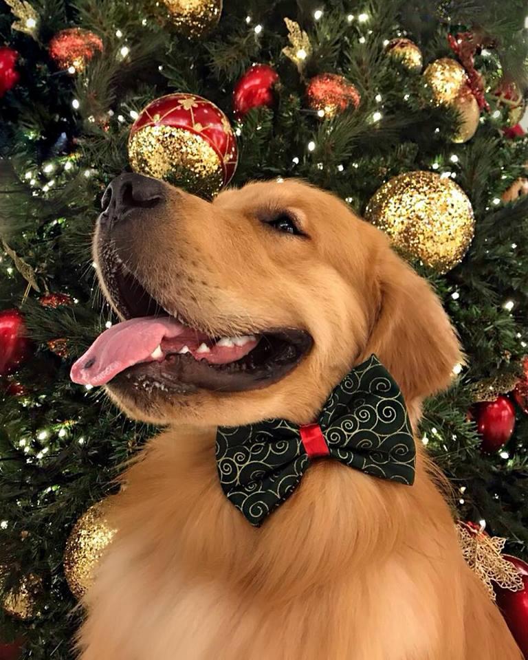 cb31a1cc9cb5f Imbatibles felicitaciones para transformar la Navidad en NaviDOG... y para  hacer sonreír