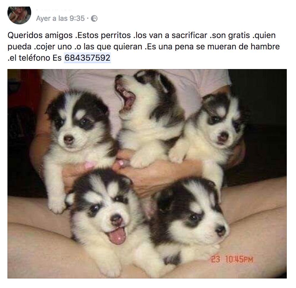 Ojo Con Los Bulos De Perros Versión 2017 No Regalan Cachorros De