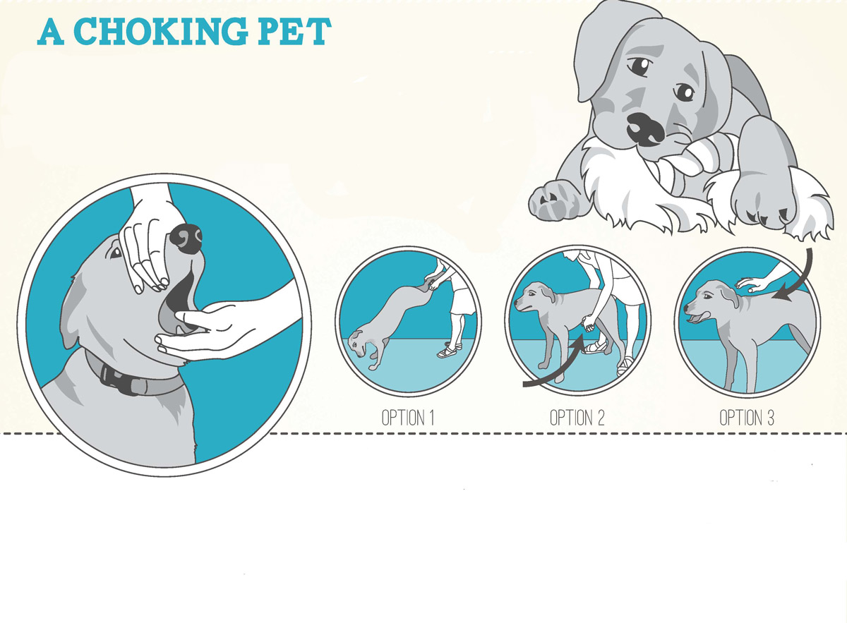 Qué Puedes Hacer Si Tu Perro Se Atraganta Y No Puede Respirar