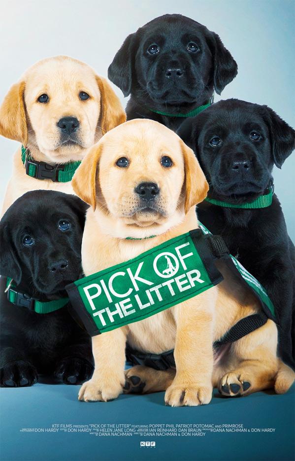 Un documental sigue durante dos años a cinco cachorros destinados a convertirse en perros guía