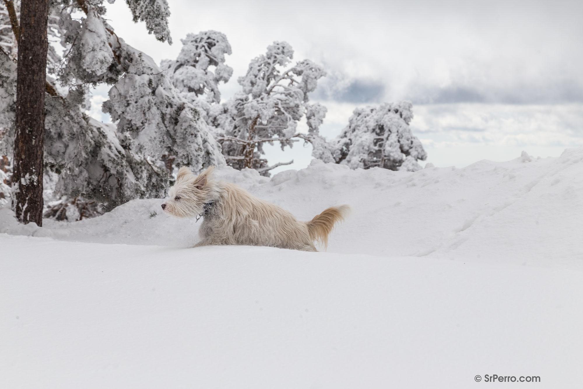 bd1effc983 Nieve, frío y perros: algunos consejos básicos para los paseos de invierno