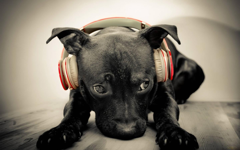 Estudio revela cuál es la música preferida de los perros