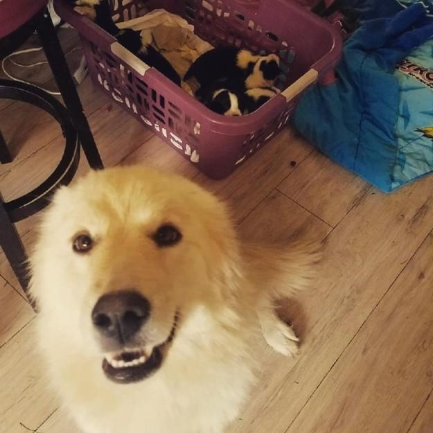 Daisy y sus cachorros