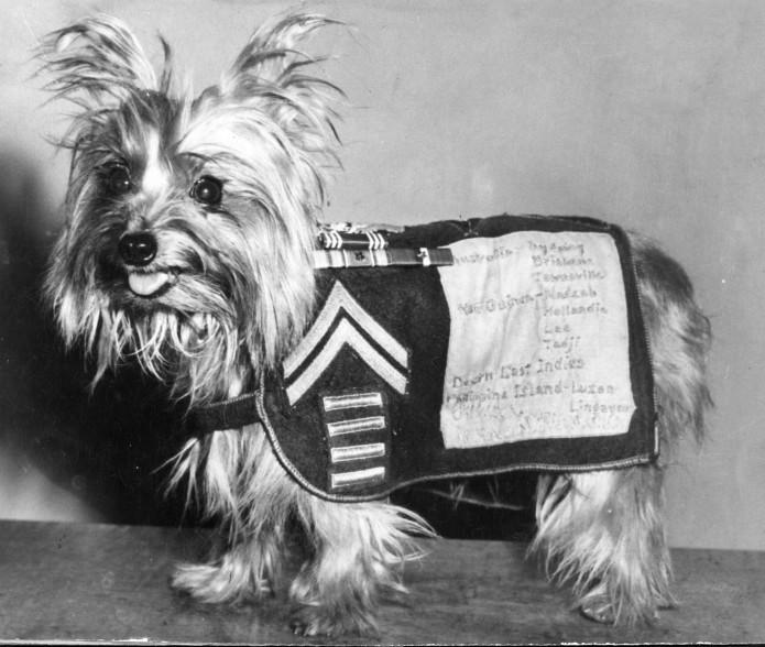 La gran Smoky, una Yorkie que fue la primera perra de terapia y heroína de  guerra, prota ahora de un corto documental   SrPerro, la guía para animales  urbanos.