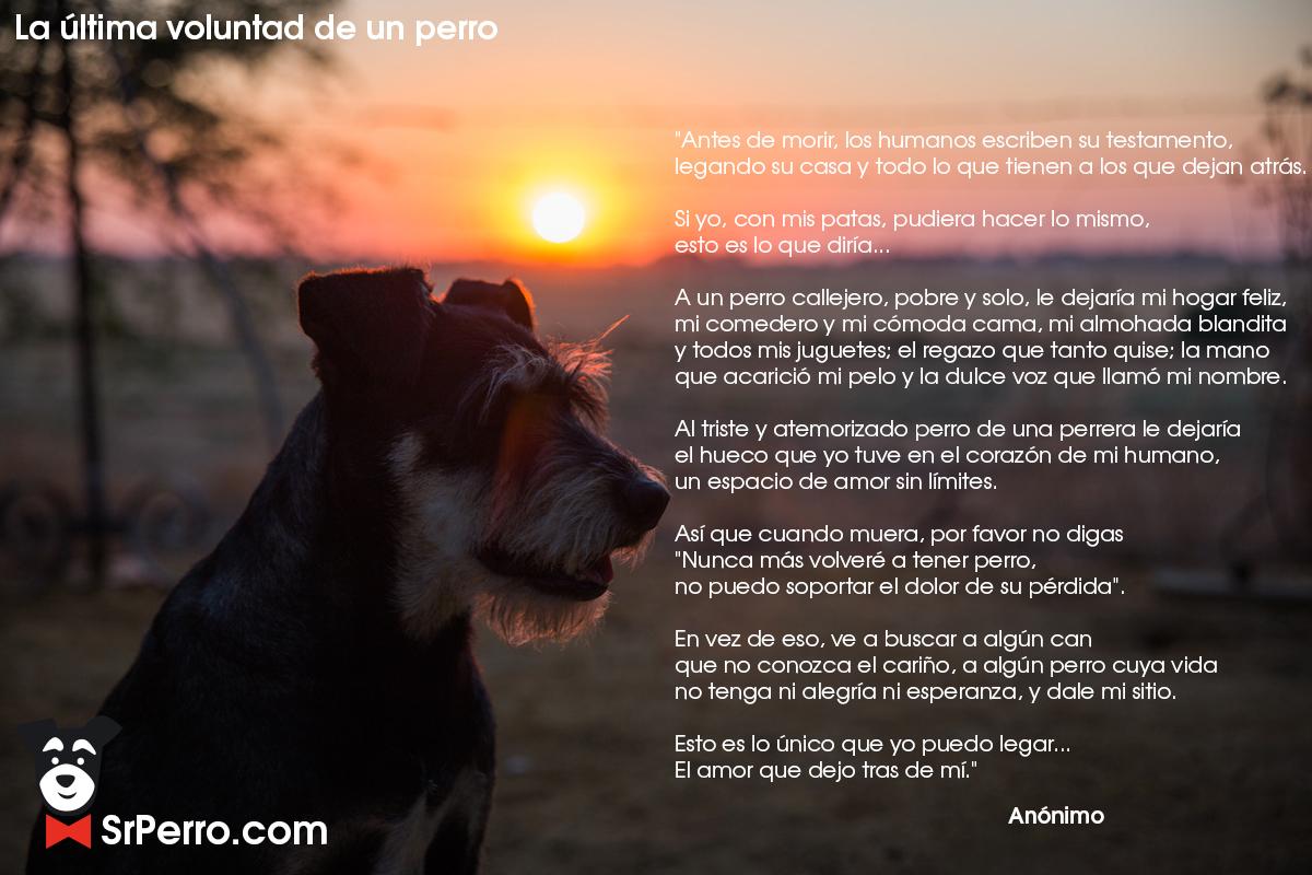 La última Voluntad De Un Perro Un Mensaje Para Todos Los