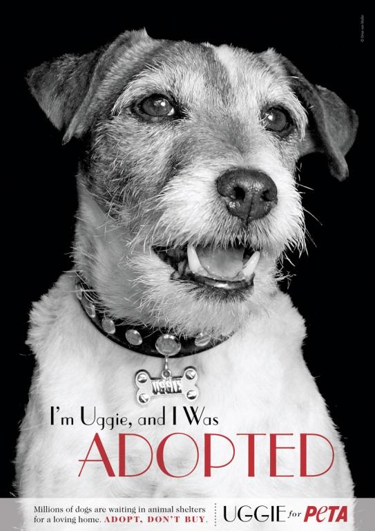 Uggie ayuda a PETA a fomentar la adopción