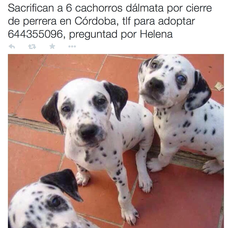Bulos sobre perros: ni Helena ni Mónica tienen cachorros que se ...