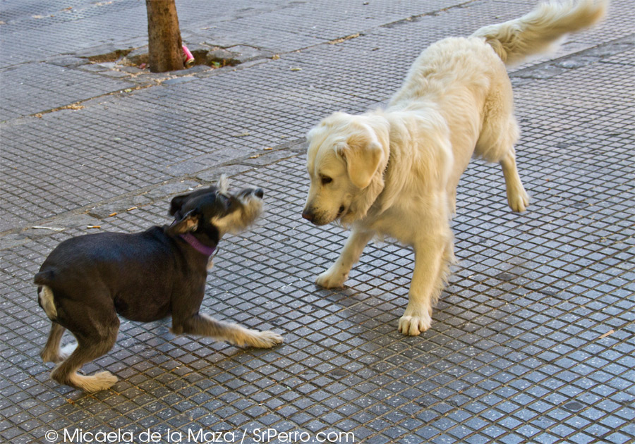 Peluqueria canina pelo corto
